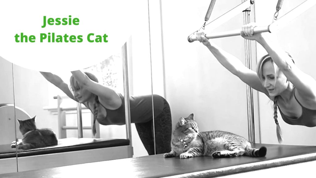 Catsssssss Jessie the Pilates Cat